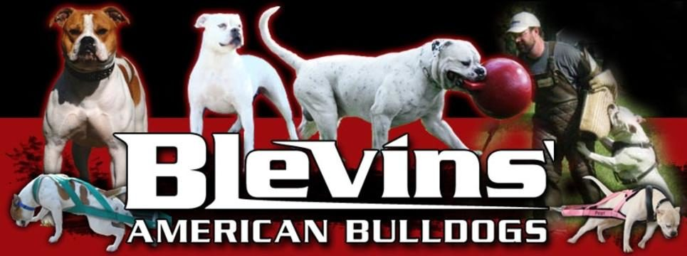 Blevins American Bulldogs